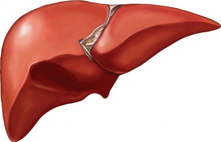 Liver original Getty