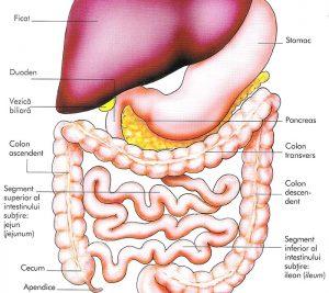 tractul-digestiv