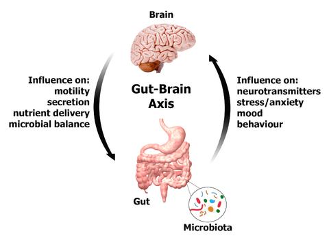 gut-brain-axis-beyond-addiction-